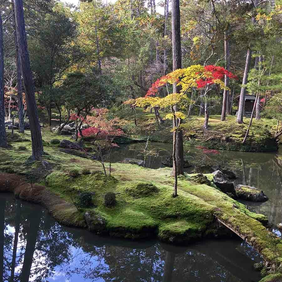 Kyoto, Japan   Travel photography and travel guide for foodies and explorers who will travel miles for good food by Jennifer from Miss Walter's